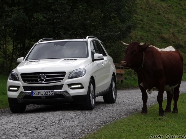 牛牛也來賞新車,天然放牧,不含瘦肉精。